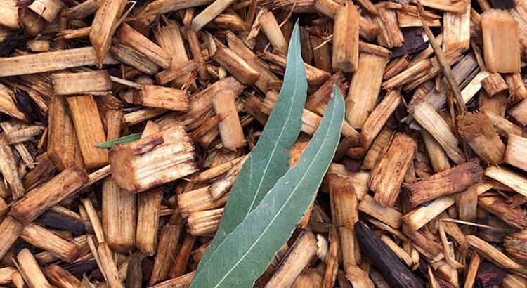 180910_LauraOtero_Acciona_BiomasaTexeiro1