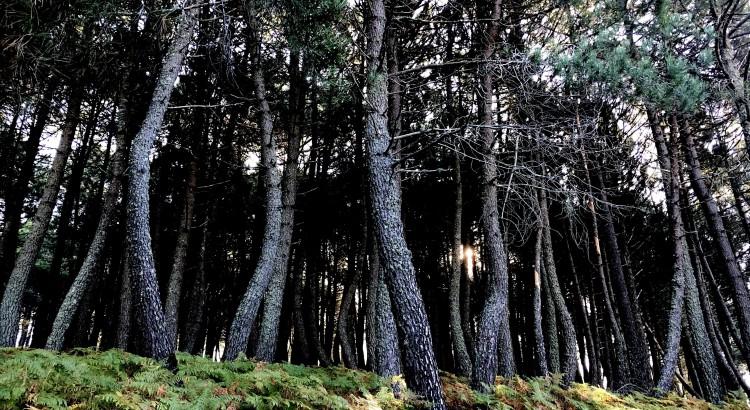 ayudas a la biomasa