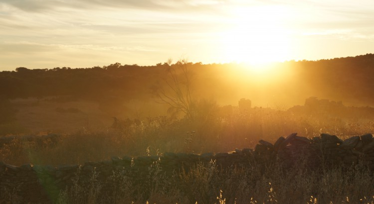El crecimiento de la energía solar supera la crisis sanitaria